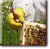Thinking of becoming a new beekeeper?